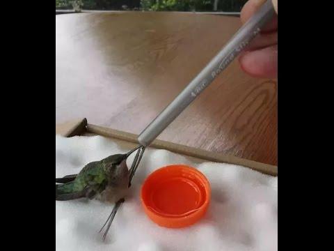Hummingbird Rescue (full version)
