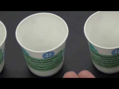 Energy flow activity demonstration