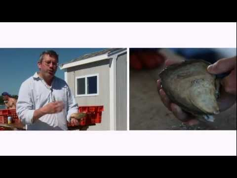 Breville -- Chef Secrets: Oysters 101