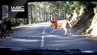 WRC - Corsica linea - Tour de Corse 2019: Top 5 Moments