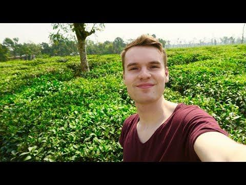 BANGLADESH TEA PARADISE IN SREEMANGAL 🇧🇩
