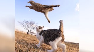 LAUGH REALLY HARD with these UNBELIEVABLY FUNNY CATS!