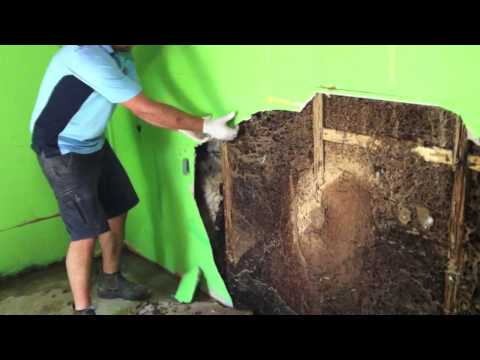 Forensic Pest Management Services discovers a massive termite nest in a wall cavity
