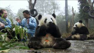 The kindergarten: snack time - Wild about Pandas - BBC One