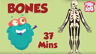 Best Learning Videos For Kids | The Dr.Binocs Show | Fun Learning Videos For Kids | By Peekaboo Kids