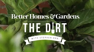 Decorating with Houseplants   The Dirt   Better Homes & Gardens