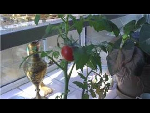 Indoor Gardening Tips : How to Make House Plant Leaves Shiny