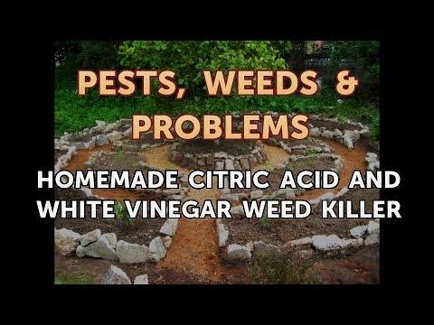 Homemade Citric Acid and White Vinegar Weed Killer