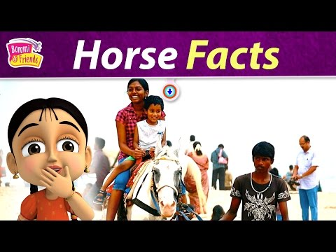 Learn All About Horse For Kids | Horse Facts | Clever Bommi,Energetic Yip,Mastermind Taco,