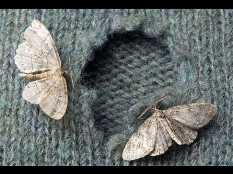 No more moths 'eating' your clothes!