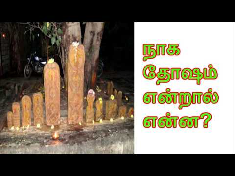 What is called Naga Dosham? நாக தோஷம் என்றால் என்ன?