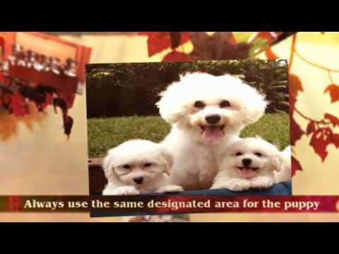 Puppy Potty Training Tips | yorkie puppy training tips | Tips For House Training a Puppy | Crate