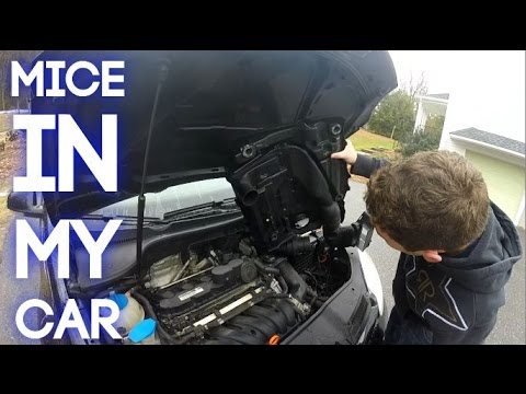 Getting the mouse out of my car!