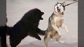 Funniest Animals - Awesome cute Pet Animals
