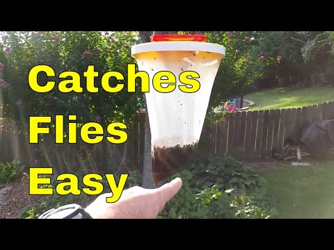 Kill Flies Easily, Redtop Fly Trap, Non Toxic Disposable Fly Catcher