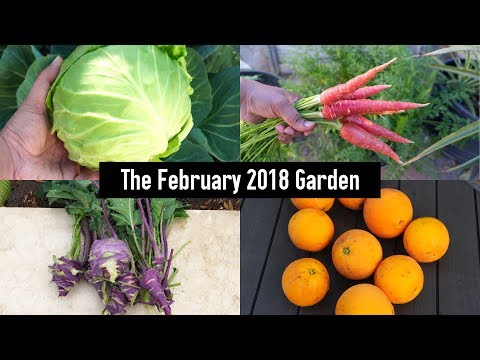 The February California Garden - Winter Harvests, Starting Summer Plants & Much More!