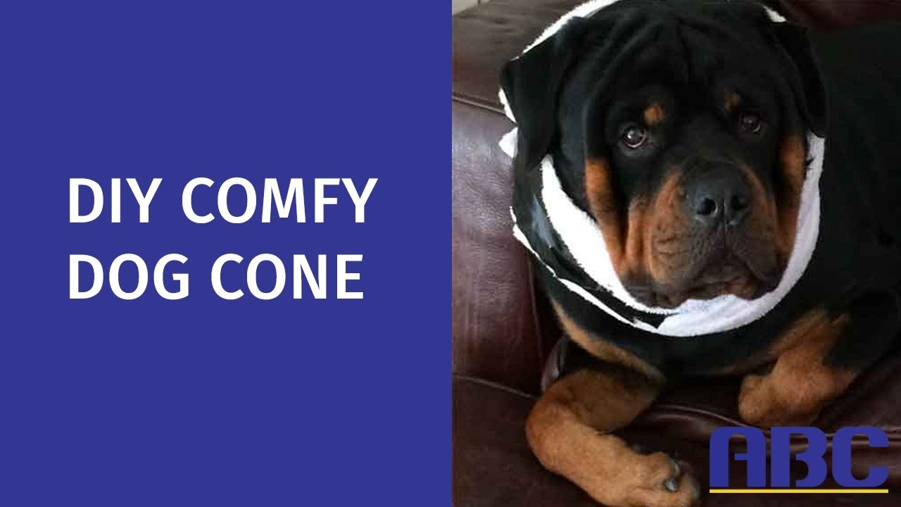 DIY Comfy Dog Cone | How to Make a Homemade Dog Cone Alternative