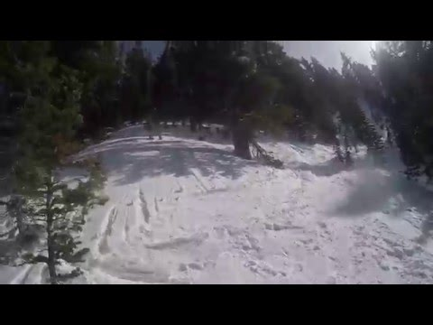 Snowbird Thunder Ridge Skiing Trees and Powder Gad Valley