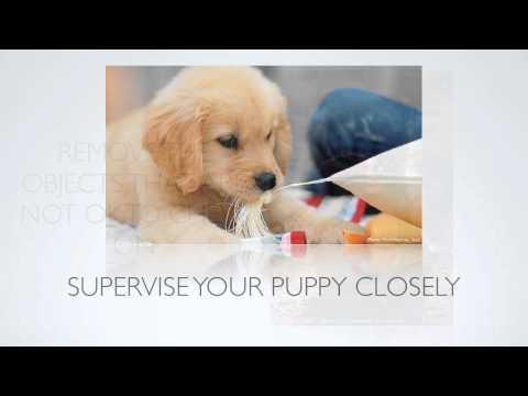 [Puppy Training Tips]  How To Stop A Dog From Chewing?