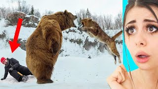 Unbelievable Animals That Saved Peoples Lives