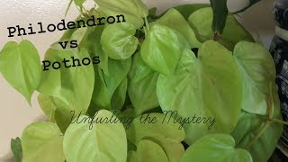 Difference between Pothos & Philodendrons |  Houseplant Identification | House Plant Tour