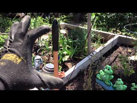 Damn Earwigs are Invading my Backyard!