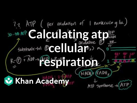 Calculating ATP Produced in Cellular Respiration