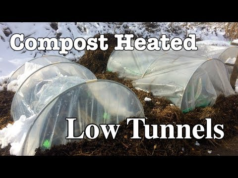 Tree Seeds - Heated Low Tunnels with Compost