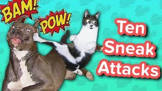 Ten Sneak Attacks // Funny Animal Compilation