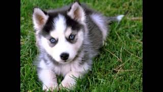 Top  10 Schönste Hunderassen