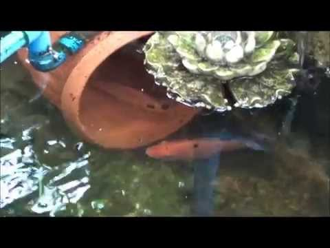 How to, KING FISH BREEDING, MADE Red Tilapia Pond, Aquaponics Philippines