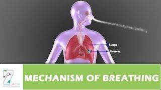 MECHANISM OF BREATHING PART 01