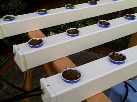 How to Build a Hydroponic Garden