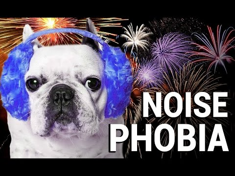 Dog Scared of Loud Noise? Treatment, Tips, Products and Training