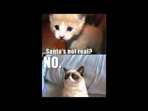 GRUMPY CAT PART 2! Best Meme / Memes Cute Cats
