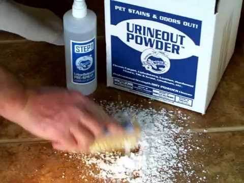 Clean Dog Urine from Tile - Video 1