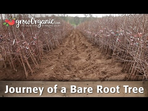 The Journey of Our Bare Root Fruit Trees