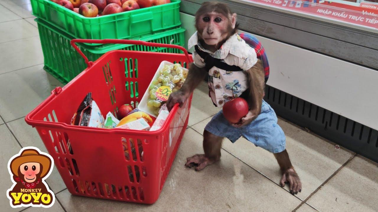 YoYo JR goes to the supermarket