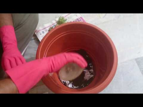 HOW TO MAKE COMPOST AT HOME IN EASY WAY!!