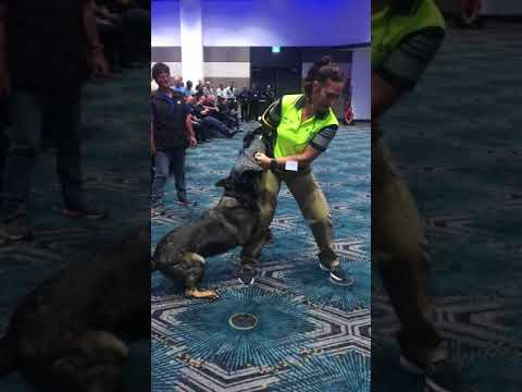 Dangerous Dog demonstration at the WA Rangers conference