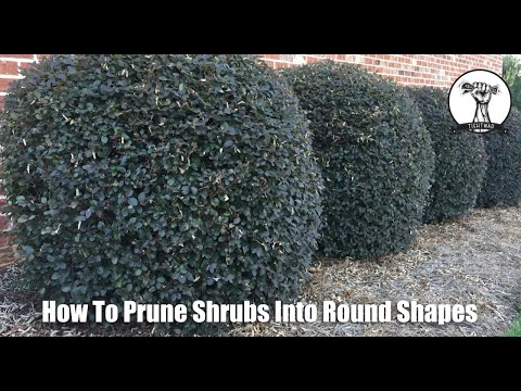 How to Prune Shrubs and Bushes