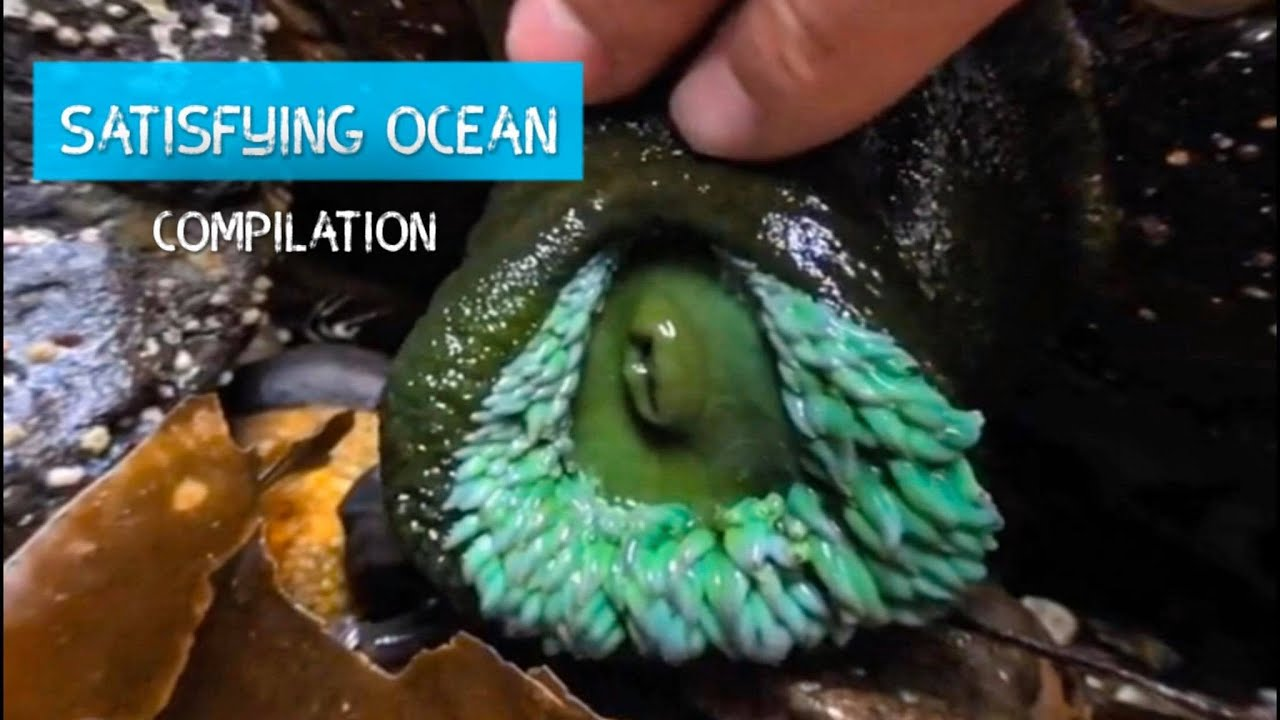 Oddly Satisfying Sea Animal Compilation!
