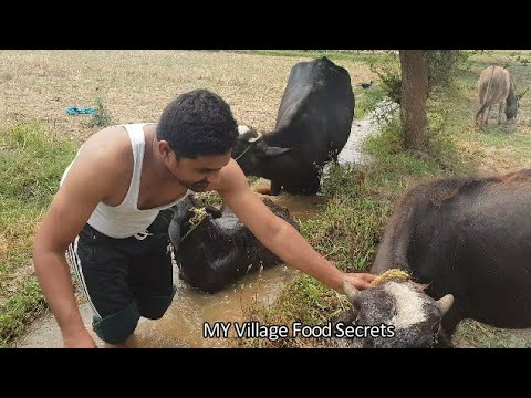My daily work routine at home| Village Life Style|Simple life | MY Village Food secrets
