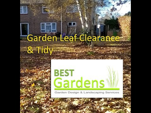 Garden Leaf Clearance & Tidy