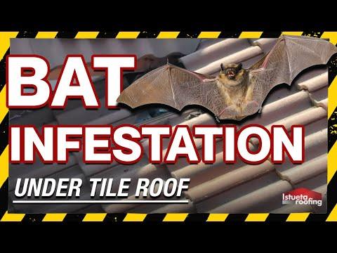 Bat Infestation Under Tile Roof- Roofing Miami, FL