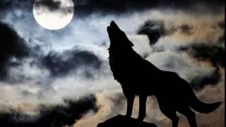 Wolf moonlight