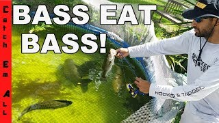 BASS EAT BASS! SOLAR ECLIPSE FISHING CHANGES in SEWER!
