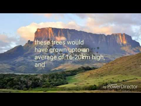 Silicon Based LiFlat Earth and Ancient Megalithic Tree Stumps