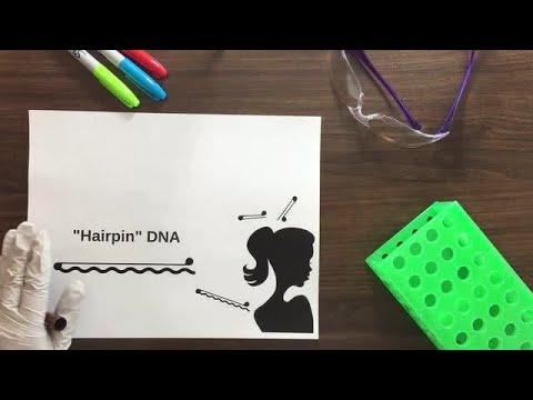 Tips for design PCR primers