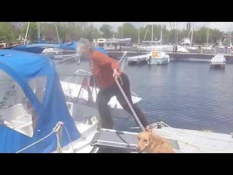 Dog at the Dock - Solvit Telescoping Dog Ramp Review